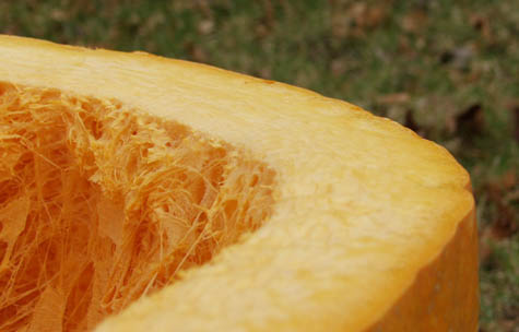Cut pumpkin close up - 1.2M